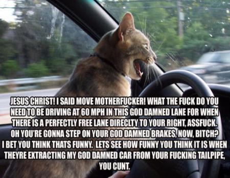 pussy road rage by Shanna Riley