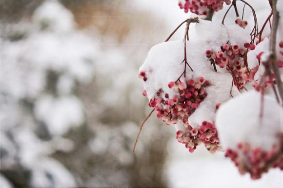 Frozen Berries by Nana B Agyei.jpg