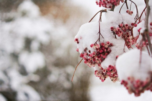 Frozen Berries by Nana B Agyei.jpg
