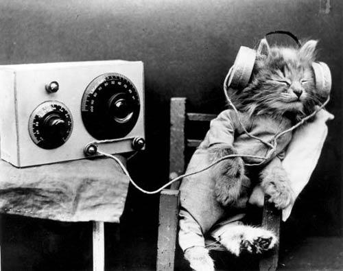 cat_headphones by stu plimsoles.jpg