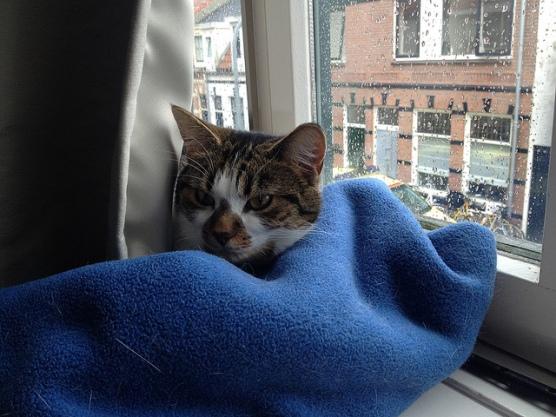 Comfy Blanket by Daviddje.jpg
