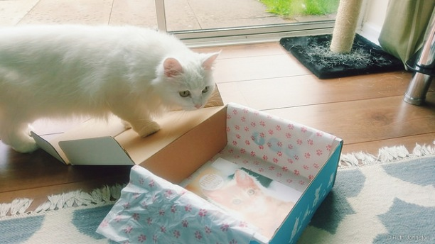 Purrfect Box by Ruth Johnston.jpg